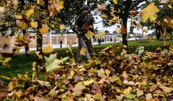 За незаконную уборку опавших листьев коммунальщики получат штрафы в 300 тыс. рублей
