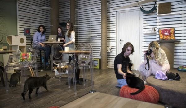 В Москве пройдет акция ко Всемирному дню домашних животных